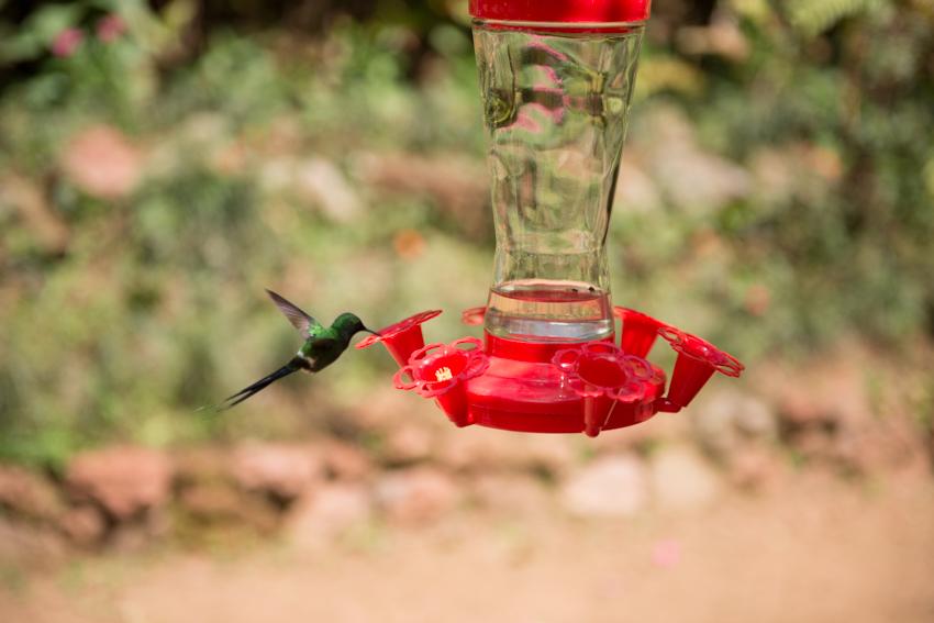 Hyperactive bird drinking a sugar mix