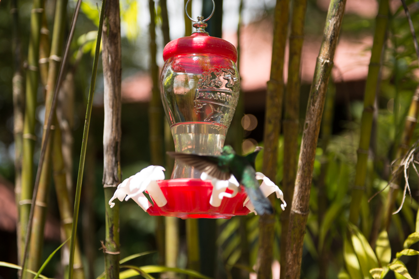 Why yes, I was trying to get the feeder in focus and the bird out of focus
