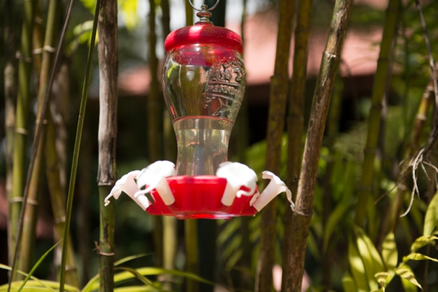 A picture of a feeder with invisible Hummingbirds